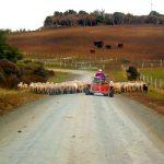 Festiwal technologii rolniczych